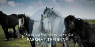 Parshat Terumah